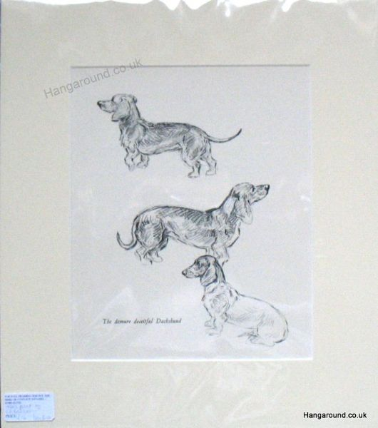 Study of three Smooth Haired Dachs - Dax B10 - 1940's print by K F Barker